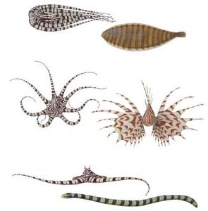 Spluch: Mimic Octopus - Magical Sea Creature