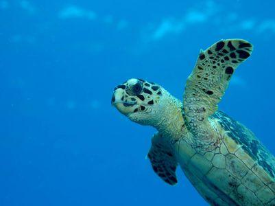 turtle.jpg 1504×1125 pixels