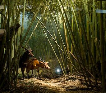 Carlo Van de Roer Photography