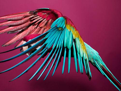 sølve sundsbø: perroquet. « shape + colour