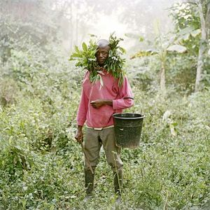 Paul Ankomah, Wild Honey Collector, Techiman District  - PIETER HUGO