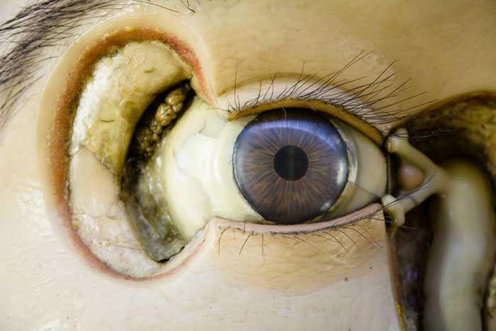 anatomicaltheatre92.jpg 700×467 pixels