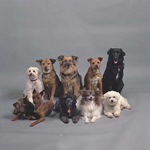 Dogs on Flickr - Photo Sharing