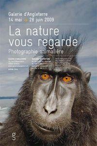 Photographie | La nature vous regarde - Photographie animalière | Galerie d'Angleterre