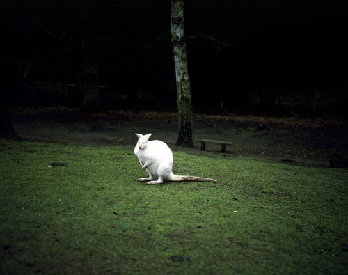 Everyone Forever   Photography   Geert Goiris (photography)
