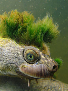 When a turtle goes punk... (and men are still idiots)