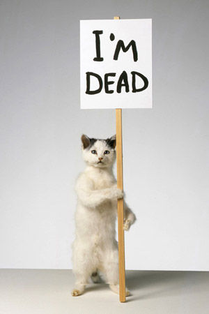 David Shrigley, Cat, 2007
