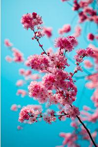 Leonard Gren Photography  LeoGren.com