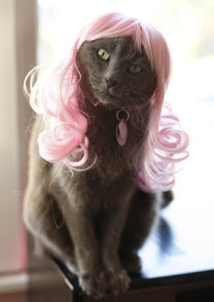 Kitty Wigs! Pink Passion