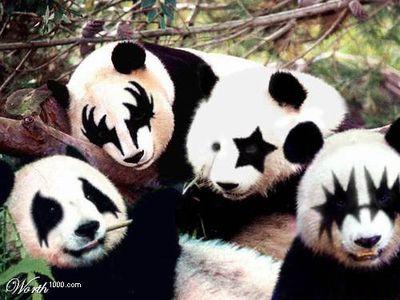 panda-kiss.jpg 500 × 375 pixels