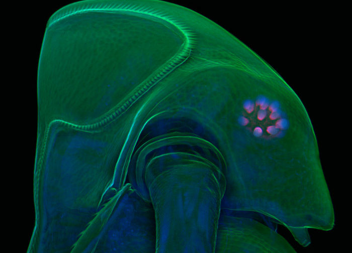 I Can't Get Enough of This Weird and Wonderful Microscopy - 2009 Olympus BioScapes Digital Imaging Competition - Gizmodo