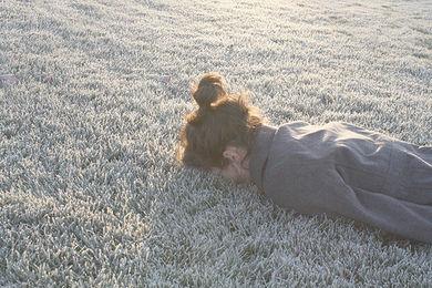 (Image) - foggy lullaby