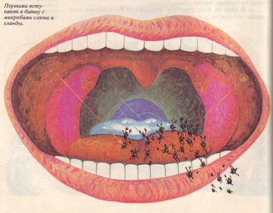 Flickr Photo Download: 11 Russian elementary school textbook on The Miracle of Life, 1992