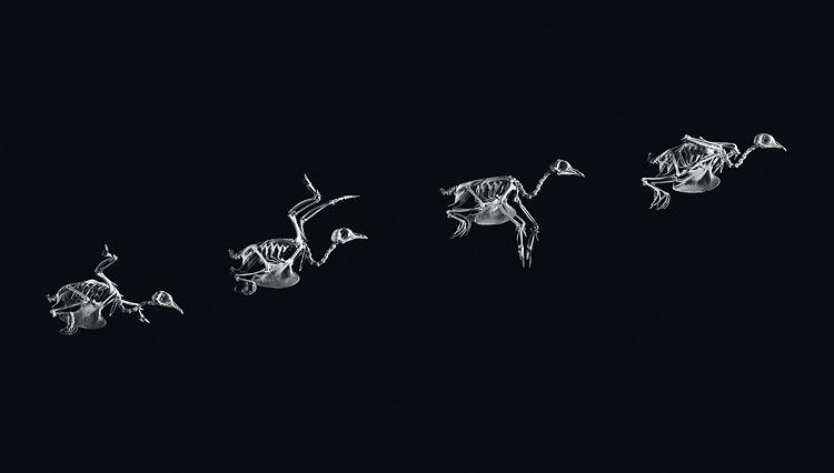 01-evolution-popup.jpg 750×426 pixels