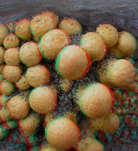 499024579_b6eb1254a8.jpg 458×500 pixels