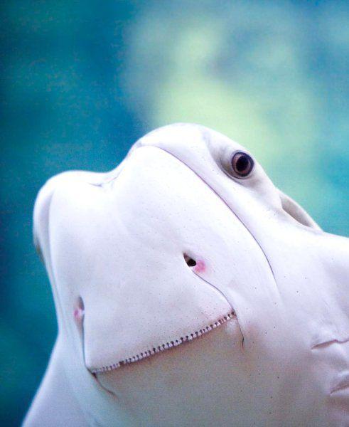 Census of Marine Life: Volksz?hlung unter Wasser - SPIEGEL ONLINE - Nachrichten - Wissenschaft