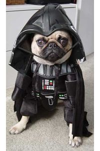 darth-vader-dog-costume.jpg 294×500 pixels