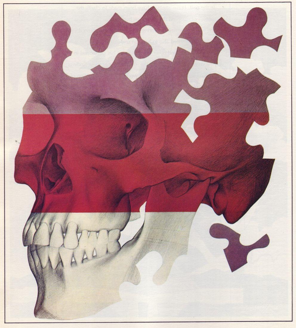 biology_oden_8_skull.jpg (image)