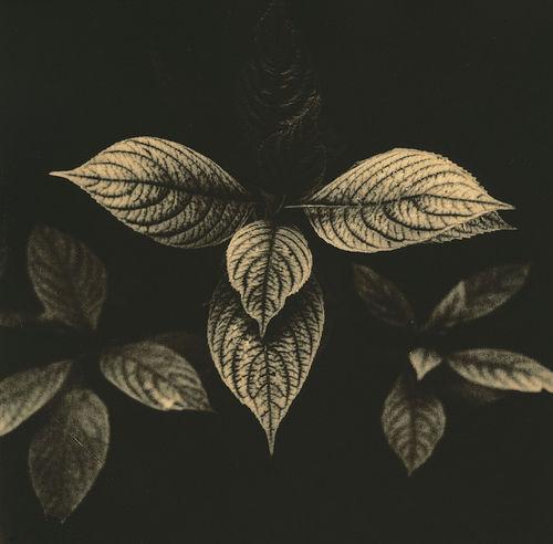 Plantas en Chillida-Leku on Flickr - Photo Sharing