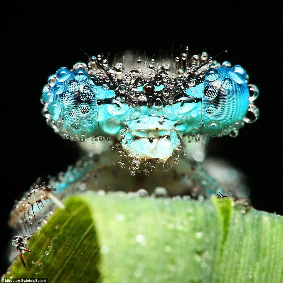 The stunning pictures of sleeping insects covered in early morning dew  Mail Online