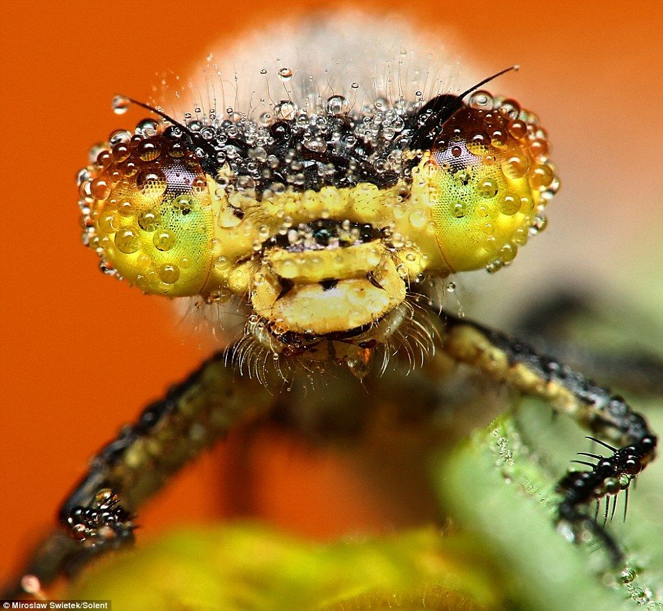 The stunning pictures of sleeping insects covered in early morning dew | Mail Online