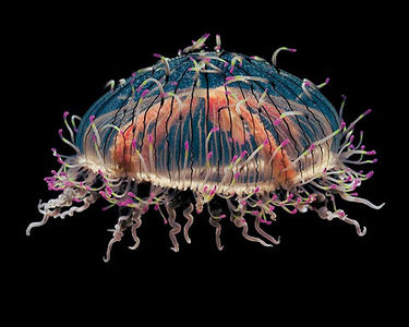 Amazing Jellyfish photography — Lost At E Minor: For creative people