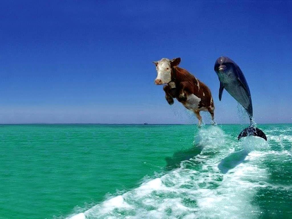 cow-dolphin.jpg 1024×768 pixels