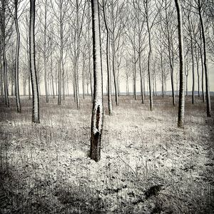 a forest on the Behance Network