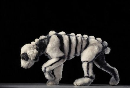 Dog Photography by Tim Flach 11