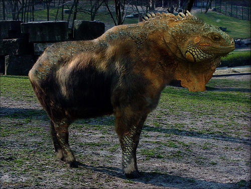 the ever so elusive Iguanotakin lunaryense ;) on Flickr - Photo Sharing!