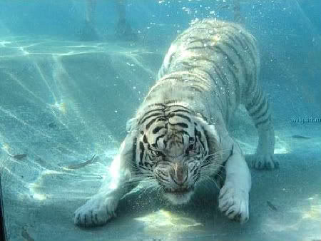 Underwater photography image by Keefers_ on Photobucket
