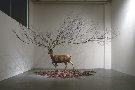 All sizes  Untitled 300 X 300 X 300 inch Deer Taxidermy, Branch, Leaves.  Flickr - Photo Sharing