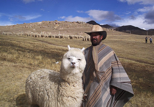 File:Bolivian Alpaca.jpg - Wikipedia, the free encyclopedia