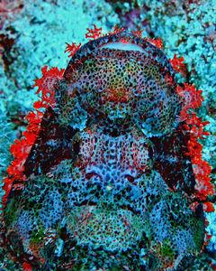 Toutes les tailles  devil scorpionfish  Flickr : partage de photos