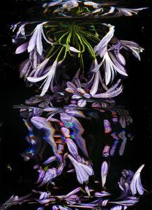 Toutes les tailles  Sans titre  Flickr : partage de photos