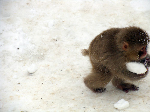"CyBeRGaTa, hellocute: ""This snow, it is mine."" (via Cute..."