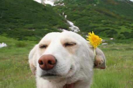 imma flower girl! - Imgur