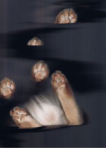 The Cat Scan