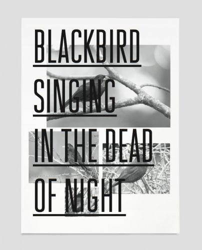 Blackbird — Trend List