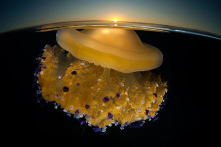 National Geographic Photography Contest Winners: 2011 - The Big Picture - Boston.com