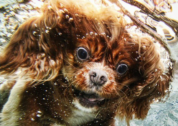 The Amazing Underwater Dog Photography of Seth Casteel
