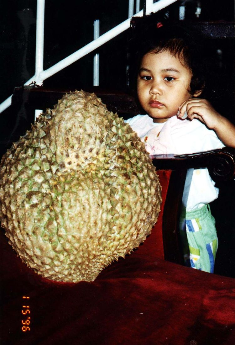 B_our_durian_star.jpg 1172×1719 pixels