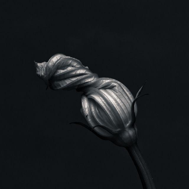 Sans titre | Flickr: partage de photos!