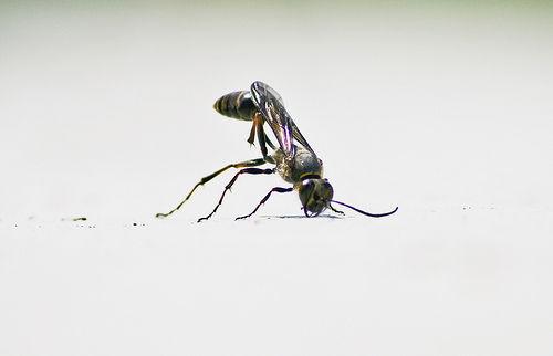 Entomo Capriola - Somersault on Flickr - Photo Sharing!