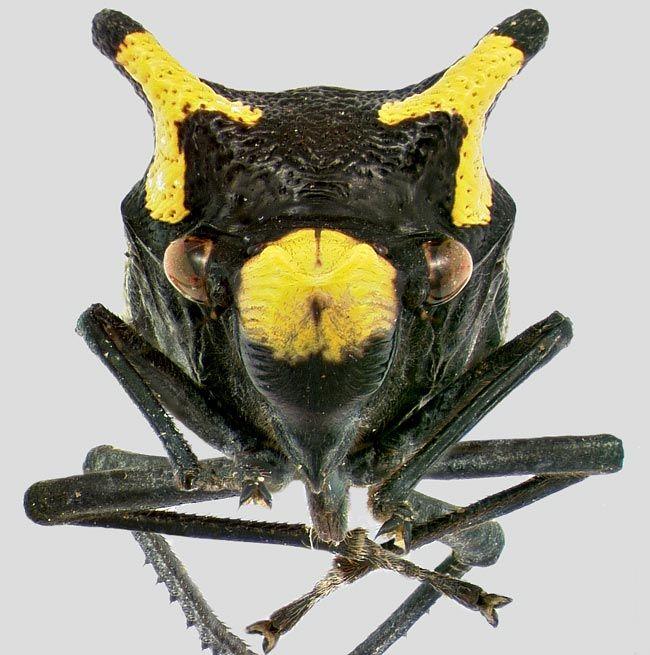 Flickr Photo Download: Sharpshooter leafhopper