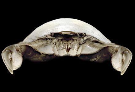 Flickr Photo Download: Thumbnail Crab