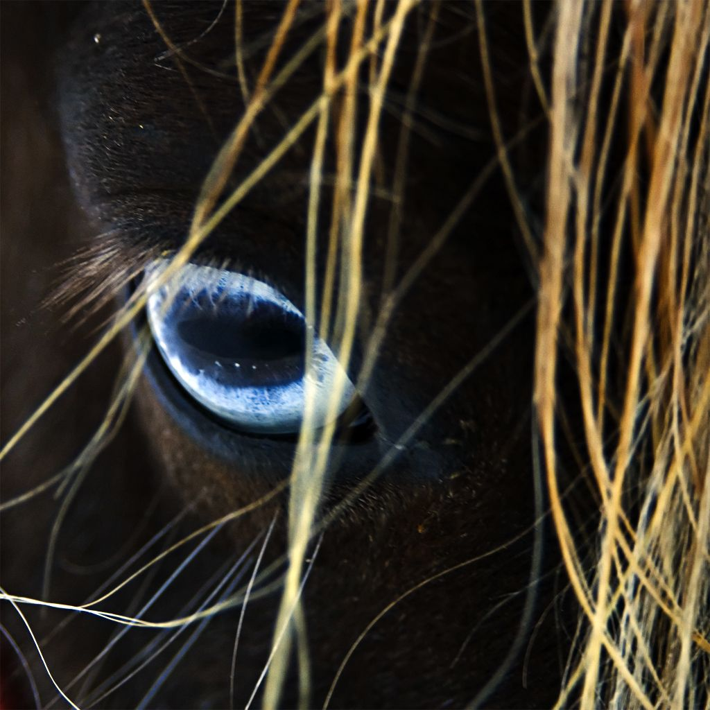 Flickr Photo Download: Deep Blue