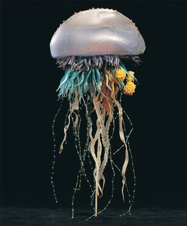 Flickr Photo Download: victorian glass model of sea creature: Portuguese man-of-war