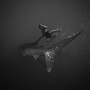 BERG BLOG - Stunningly evocative underwater images by...