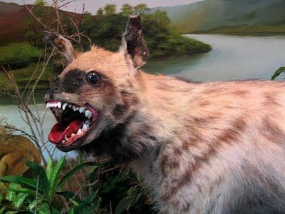 Taxidermy done so horrible it is beautiful. - Imgur